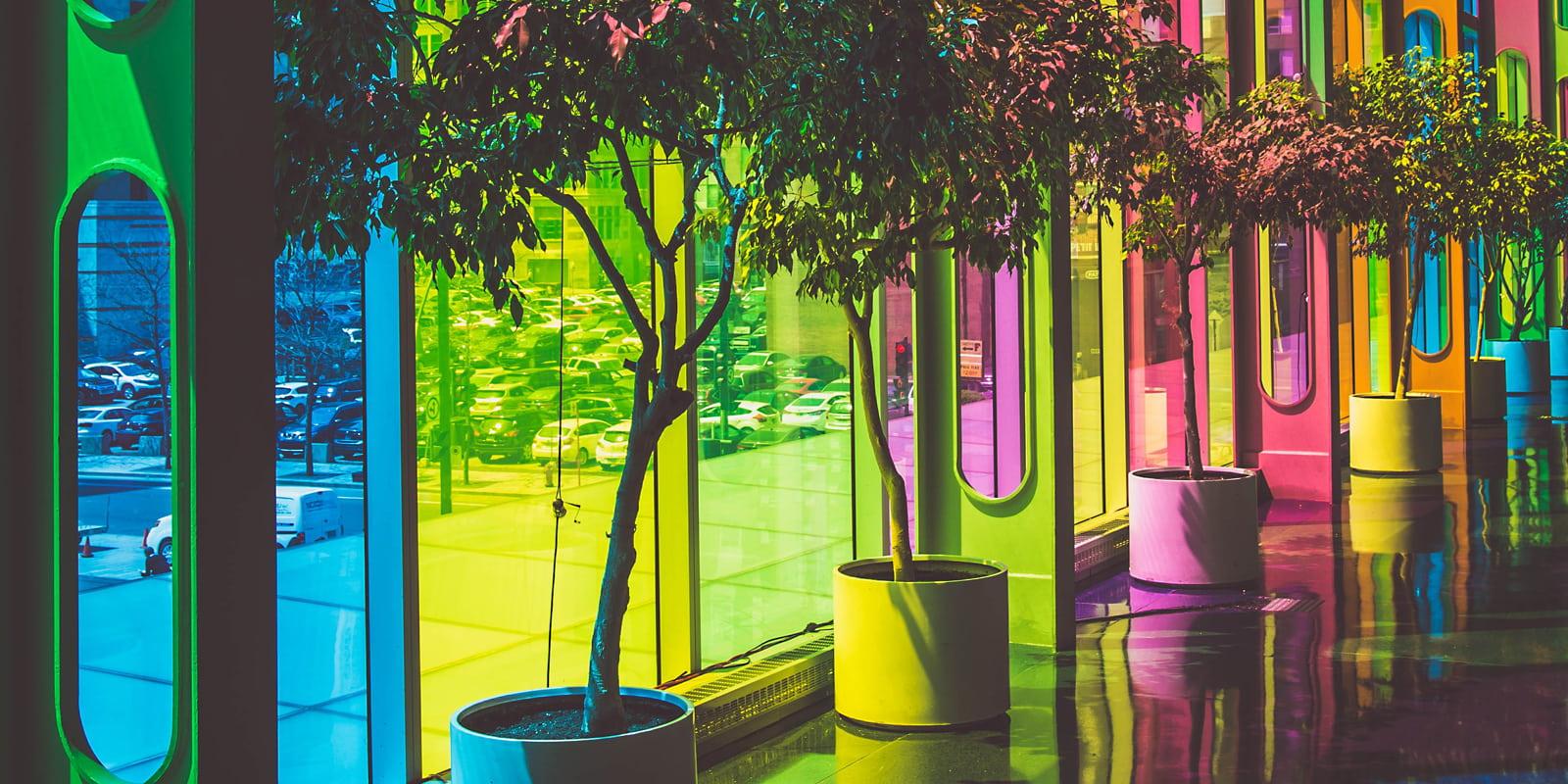 Pflanzen vor bunten Fenstern